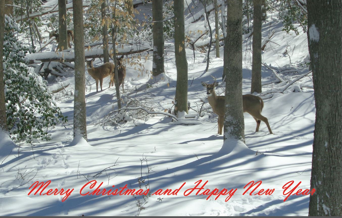 Deer Picture in Backyard
